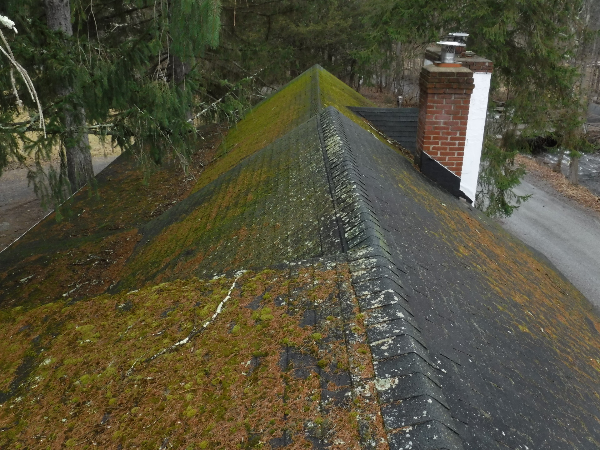 Moss growth on the roof.